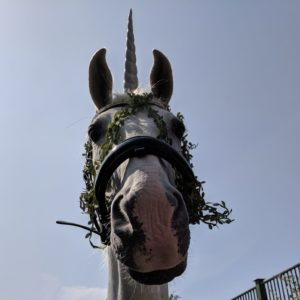 Unicorn horse called Sid